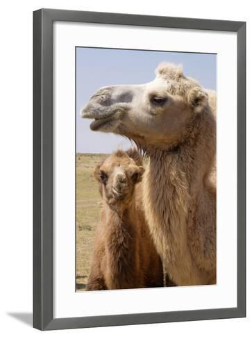 Mongolia, Lake Tolbo, Bactrian Camels-Emily Wilson-Framed Art Print