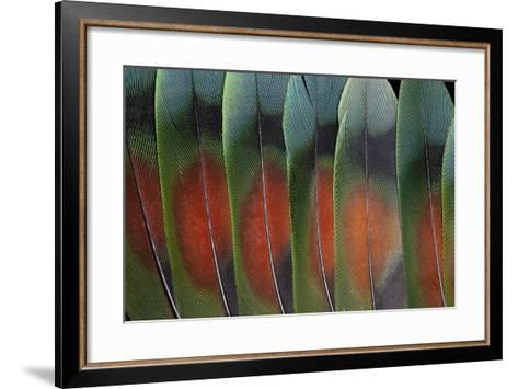Love Bird Tail Feathers Fanned Out-Darrell Gulin-Framed Art Print