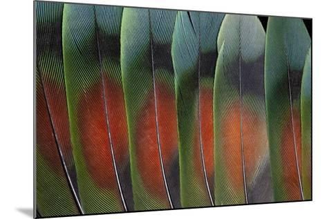 Love Bird Tail Feathers Fanned Out-Darrell Gulin-Mounted Photographic Print