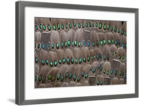 Grey Peacock Tail Feathers-Darrell Gulin-Framed Art Print