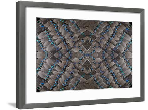 Grey Peacock Tail Feathers Design-Darrell Gulin-Framed Art Print