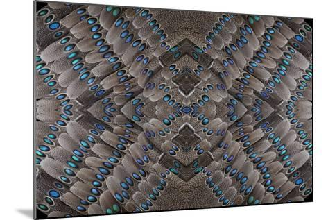 Grey Peacock Tail Feathers Design-Darrell Gulin-Mounted Photographic Print