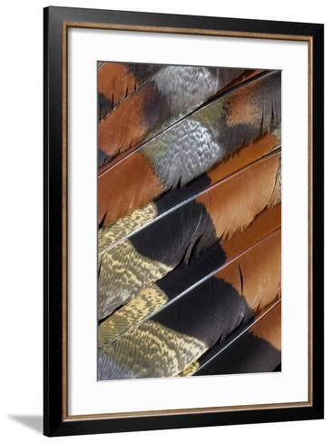 Wing Detail of Feathers Sun Bittern-Darrell Gulin-Framed Art Print