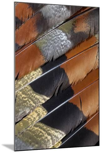 Wing Detail of Feathers Sun Bittern-Darrell Gulin-Mounted Photographic Print