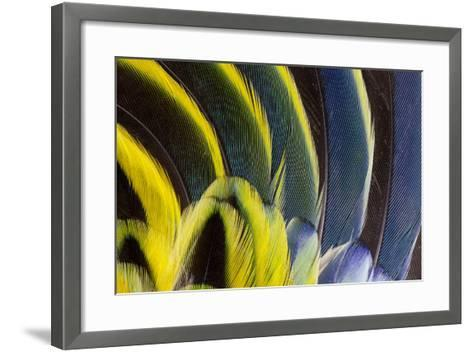 Wing Feathers Fanned Out on Eastern Rosella-Darrell Gulin-Framed Art Print