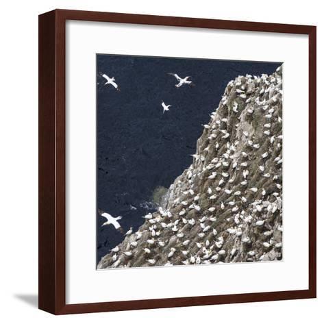Scotland, Shetland Island-Martin Zwick-Framed Art Print