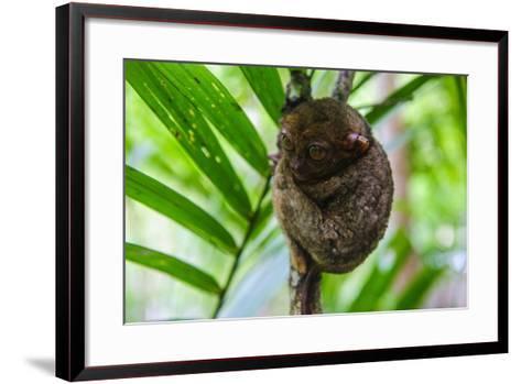 Philippine Tarsier, Bohol, Philippines-Michael Runkel-Framed Art Print