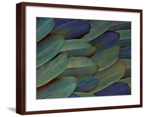 Scarlet and Blue Gold Macaw Wing Feathers-Darrell Gulin-Framed Art Print