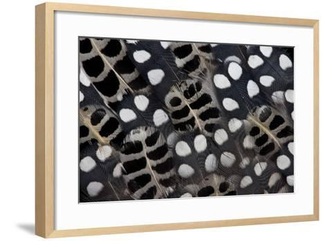 Spots of White on Mearns Quails Feather Design-Darrell Gulin-Framed Art Print