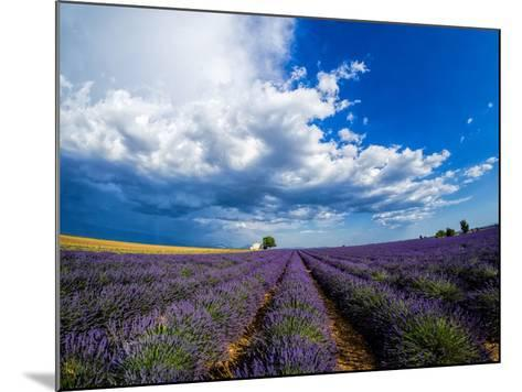 France, Provence, Old Farm House in Field of Lavender-Terry Eggers-Mounted Photographic Print