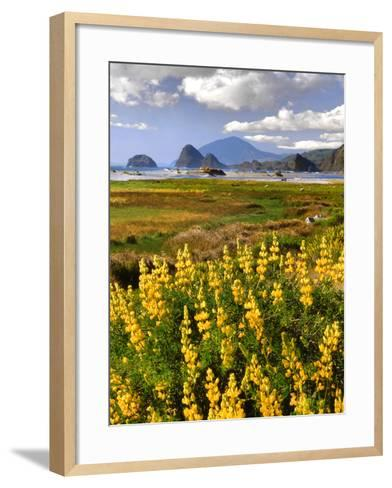 USA, Oregon, Ophir. Landscape of Yellow Lupine and Ocean Beach-Jaynes Gallery-Framed Art Print