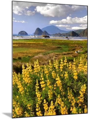USA, Oregon, Ophir. Landscape of Yellow Lupine and Ocean Beach-Jaynes Gallery-Mounted Photographic Print