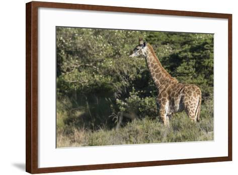 South Africa, Eastern Cape, East London. Inkwenkwezi Game Reserve-Cindy Miller Hopkins-Framed Art Print