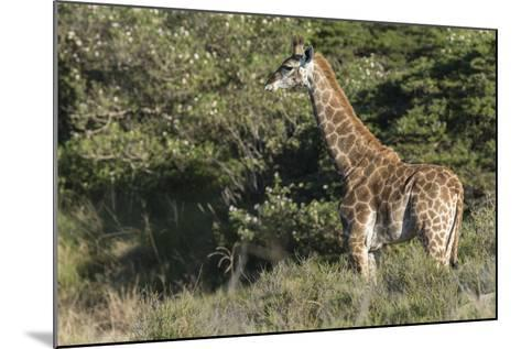 South Africa, Eastern Cape, East London. Inkwenkwezi Game Reserve-Cindy Miller Hopkins-Mounted Photographic Print