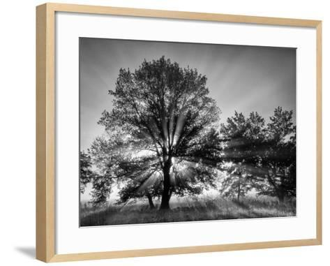 USA, Tennessee, Great Smoky Mountains National Park, Sunrise Through Fog and Trees at Cades Cove-Ann Collins-Framed Art Print