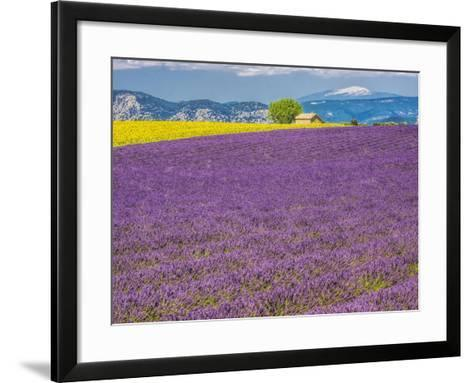 France, Provence, Old Farm House in Field of Lavender and Sunflowers-Terry Eggers-Framed Art Print