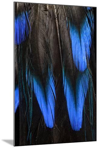 Feather Pattern in Black and Blue-Darrell Gulin-Mounted Photographic Print