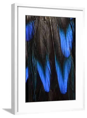 Feather Pattern in Black and Blue-Darrell Gulin-Framed Art Print