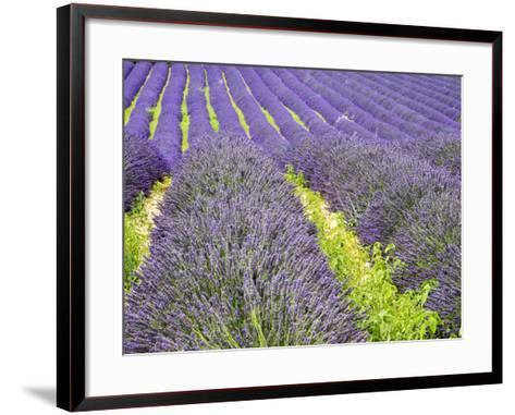 France, Provence, Patterns in the Lavender Field Near Roussillon-Terry Eggers-Framed Art Print