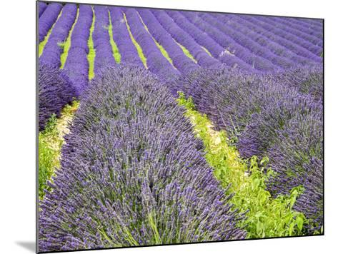 France, Provence, Patterns in the Lavender Field Near Roussillon-Terry Eggers-Mounted Photographic Print