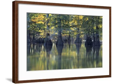 Bald Cypress Trees Horseshoe Lake State Park Illinois-Richard and Susan Day-Framed Art Print