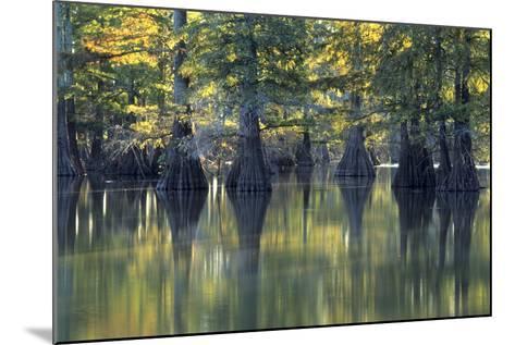 Bald Cypress Trees Horseshoe Lake State Park Illinois-Richard and Susan Day-Mounted Photographic Print