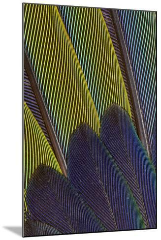 Jenday Conure Wing Feather Detail-Darrell Gulin-Mounted Photographic Print