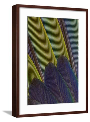 Jenday Conure Wing Feather Detail-Darrell Gulin-Framed Art Print