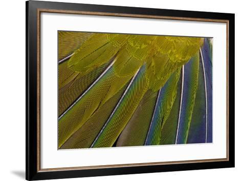 Jenday Conure-Darrell Gulin-Framed Art Print