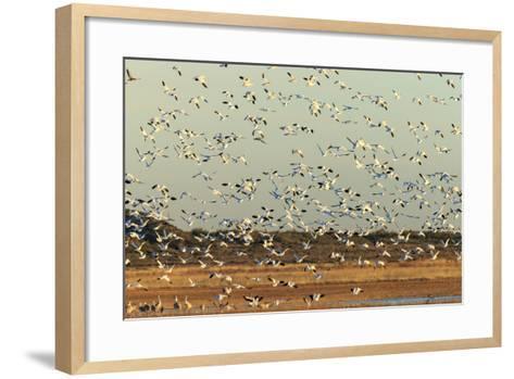 Bosque Del Apache National Wildlife Refuge, New Mexico-Maresa Pryor-Framed Art Print