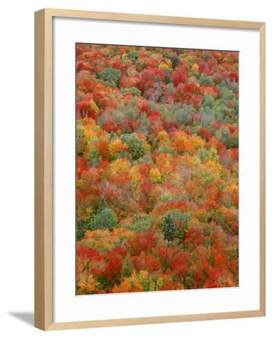 USA, Minnesota, Superior National Forest, Autumn Adds Color to Northern Hardwood Forests-John Barger-Framed Art Print