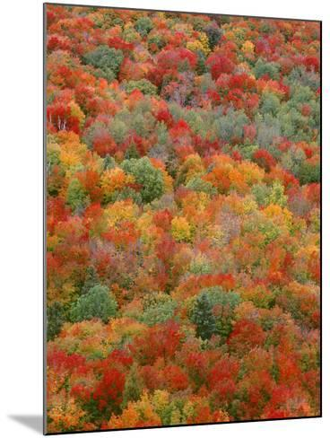 USA, Minnesota, Superior National Forest, Autumn Adds Color to Northern Hardwood Forests-John Barger-Mounted Photographic Print