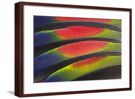 Colorful Wing Feathers of the Amazon Parrot-Darrell Gulin-Framed Art Print