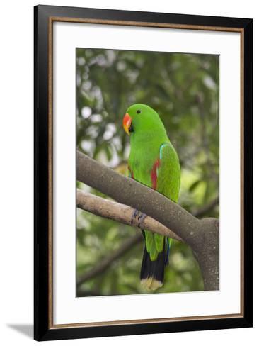 Singapore. Colorful Green Parrot-Cindy Miller Hopkins-Framed Art Print