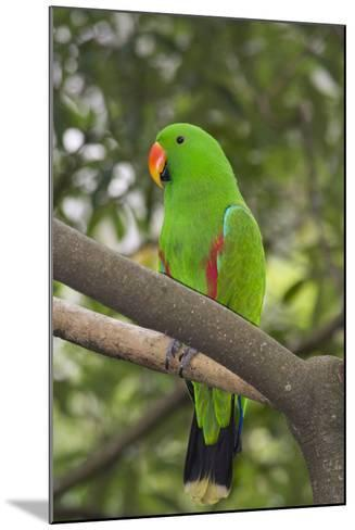 Singapore. Colorful Green Parrot-Cindy Miller Hopkins-Mounted Photographic Print
