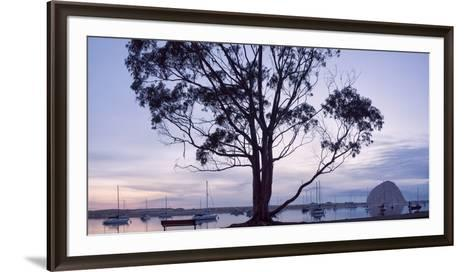USA, California, Panoramic View of Eucalyptus Tree and Morro Rock at Sunset-Ann Collins-Framed Art Print