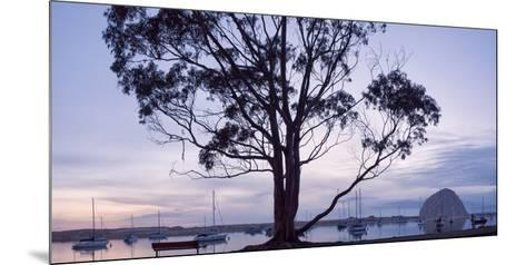 USA, California, Panoramic View of Eucalyptus Tree and Morro Rock at Sunset-Ann Collins-Mounted Photographic Print