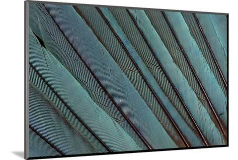 Kingfisher Wing Feathers-Darrell Gulin-Mounted Photographic Print