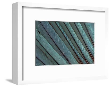 Kingfisher Wing Feathers-Darrell Gulin-Framed Art Print