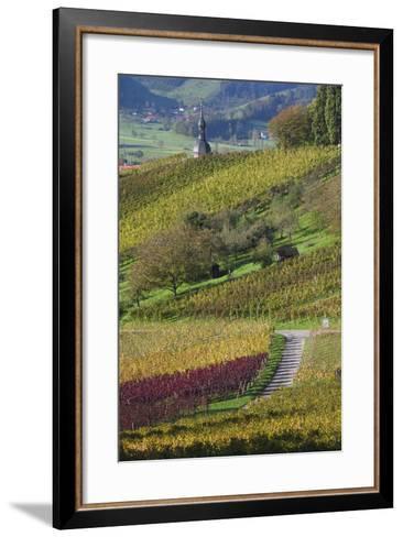 Germany, Baden-Wurttemburg, Black Forest, Gengenbach, Hillside Vineyards in Fall-Walter Bibikow-Framed Art Print