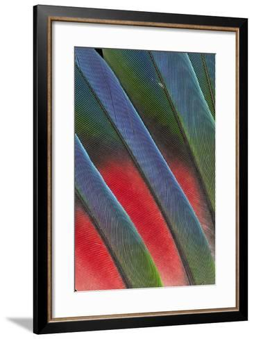 Fanned Out Tail Feathers of the Blue Headed Pionus-Darrell Gulin-Framed Art Print