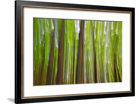 Canada, Quebec, Mount St-Bruno Conservation Park. Maple Grove Abstract at Sunset-Jaynes Gallery-Framed Art Print