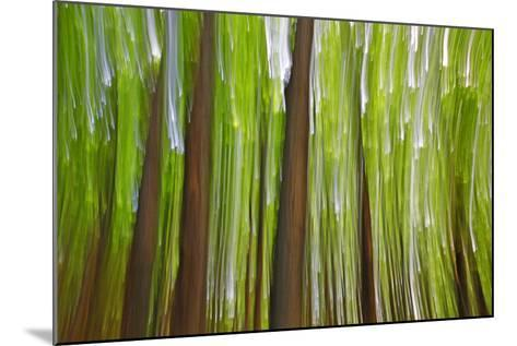 Canada, Quebec, Mount St-Bruno Conservation Park. Maple Grove Abstract at Sunset-Jaynes Gallery-Mounted Photographic Print