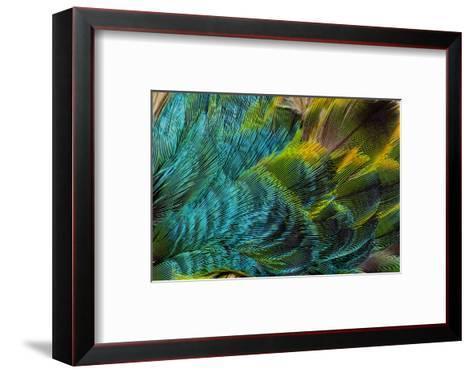 Feather Design-Darrell Gulin-Framed Art Print
