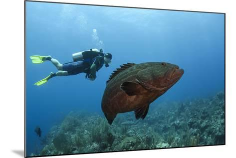 Black Grouper and Diver, Hol Chan Marine Reserve, Belize-Pete Oxford-Mounted Photographic Print