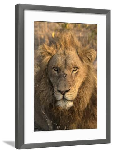 Africa, Botswana, Savuti Game Reserve. Male Lion Close-Up-Jaynes Gallery-Framed Art Print