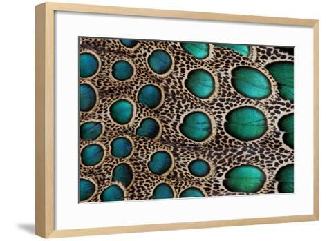 Feather Design of the Malay Peacock Pheasant-Darrell Gulin-Framed Art Print