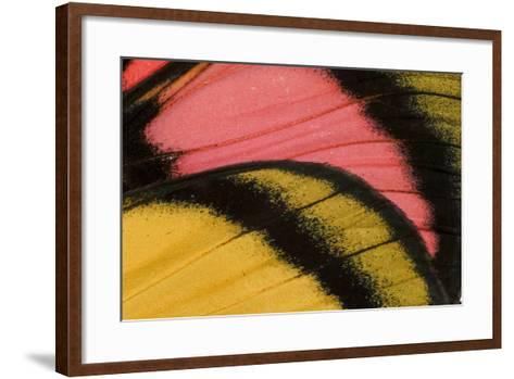 Close-Up Detail Wing Pattern of Tropical Butterfly-Darrell Gulin-Framed Art Print
