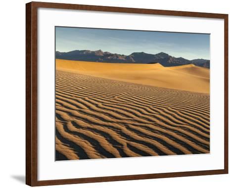 USA, California, Death Valley National Park. Early Morning Sun Hits Mesquite Flat Dunes-Ann Collins-Framed Art Print