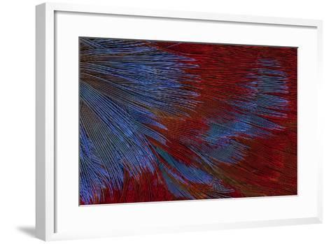 Solomon Island Toucanet-Darrell Gulin-Framed Art Print